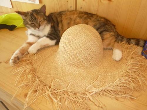 Myrtille sur chapeau